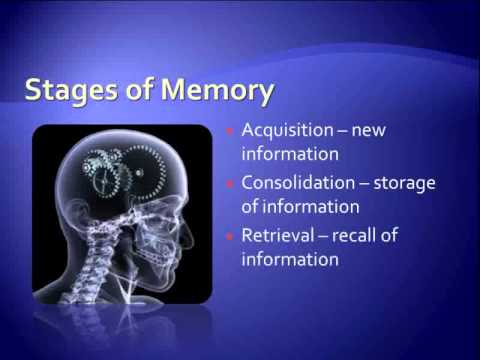 Improve Memory Power | Ways to Improve Memory | Improve Brain Memory