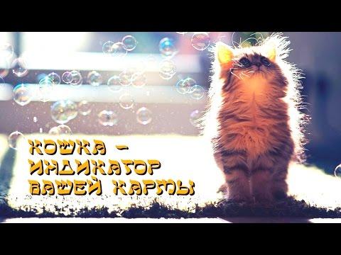 Кошка — индикатор вашей кармы