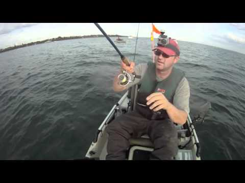 Ride the Hobie (kayak snapper fishing)