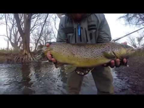 Western New York Fly Fishing
