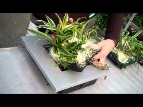 Comment changer la poche d 39 un cadre v g tal wallflower for Fabriquer cadre vegetal mural