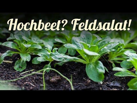 Hochbeet Im Winter Sinnvoll Nutzen | Feldsalat Spinat Postelein Anbauen | Selbstversorgung Im Winter