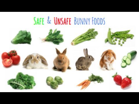 List Of Food Rabbits Can And Can