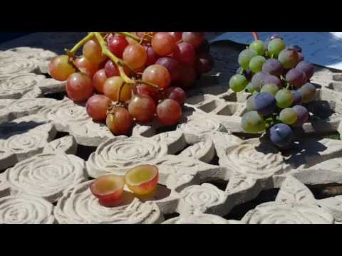 Category table grapes - Difference between wine grapes and table grapes ...