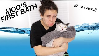 GIVING MY CAT HER FIRST BATH | AYYDUBS