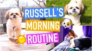 MORNING ROUTINE - DOG EDITION (HILARIOUS)