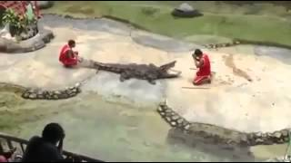 Did you kidding crocodile Happens   Timsahla Şaka Olurmu