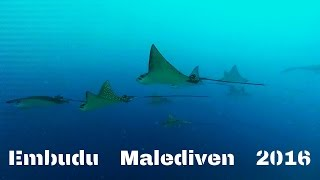 Embudu / Maldives  2016 / Dive in !!!