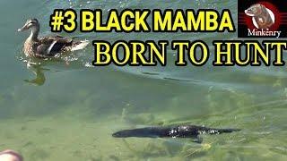 Episode 3- Caching Training Begins   Black Mamba: Born to Hunt