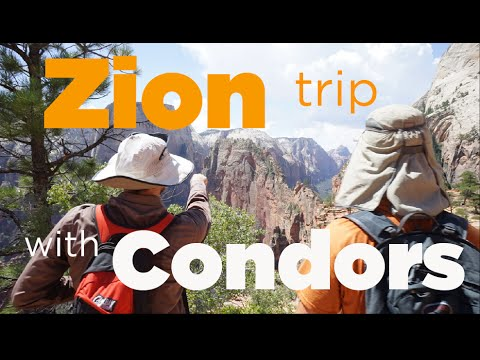 4th of July in Zion with Condors