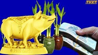 12 con giáp chọn cây phong thủy nào để may mắn giàu có quanh năm