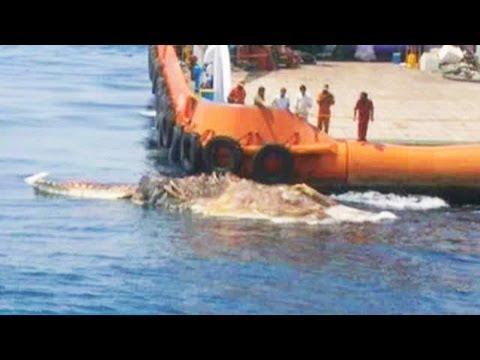 Труп динозавра всплыл в Персидском заливе