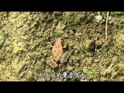 台灣-小人物大英雄-20150525 草木溼樂園