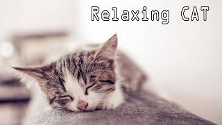 Download Lagu Tidur Kucing Musik - Relaxing Gratis STAFABAND