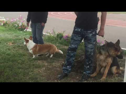 выставка собак в уральске