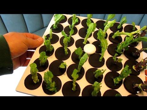 Aeroponics I Propagate Plants Fast & Easy From Cuttings I Clone King 36