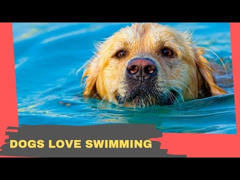 FUNNY DOGS LOVE SWIMMING 2019 VIDEO COMPILATION
