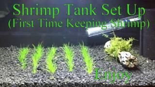 Shrimp Tank Set Up Step By Step