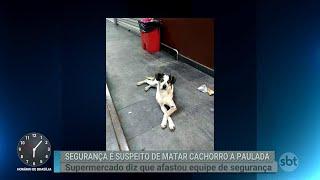Crime cometido contra um cachorro está revoltando e movendo pessoas pelo país | Primeiro Impacto