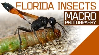 Florida Insects Macro Photography
