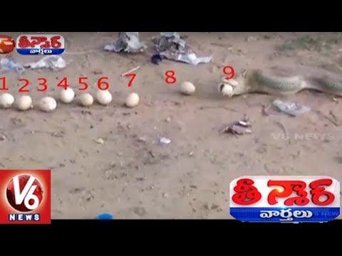 Cobra Throws Up 12 Eggs After Swallowing Dozen In Mancherial District | Teenmaar News