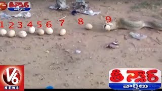 Cobra Throws Up 12 Eggs After Swallowing Dozen In Mancherial District | Teenmaar News