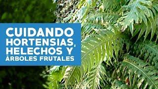 ¿Cómo cuidar hortensias, helechos y árboles frutales?