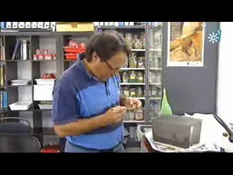 Auge de la cría de caracoles.Tierra y Mar nº 935 Emisión: 17-06-2012