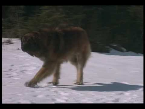 The Call of the Wild: Dog of t... is listed (or ranked) 16 on the list The Best Rutger Hauer Movies