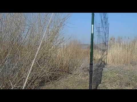 ловля варакушки видео