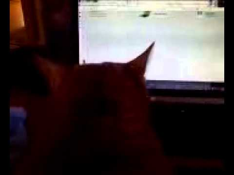 Fat Cat Searching The Web For kitty Porn video