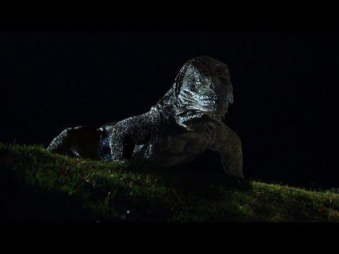Комодо остров ужаса скачать торрент