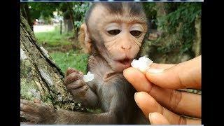Feed baby monkey, How lovely small baby monkey Bela & Chase!