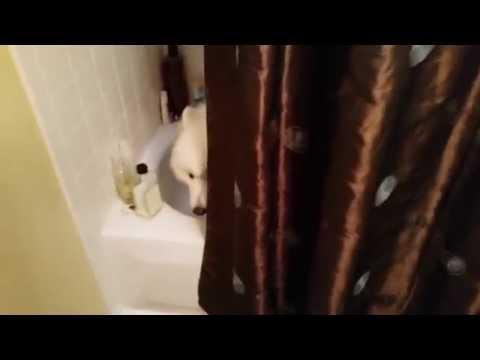 Lexi หมาน้อยสุดน่ารัก เข้าไปทำไรในนั้น