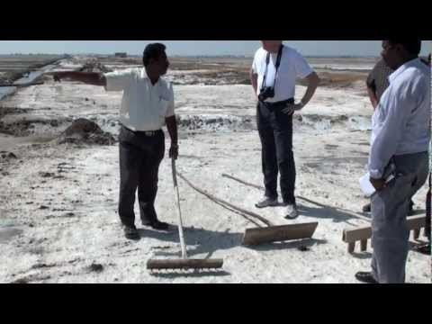 Salt harvesting in Tuticorin, India