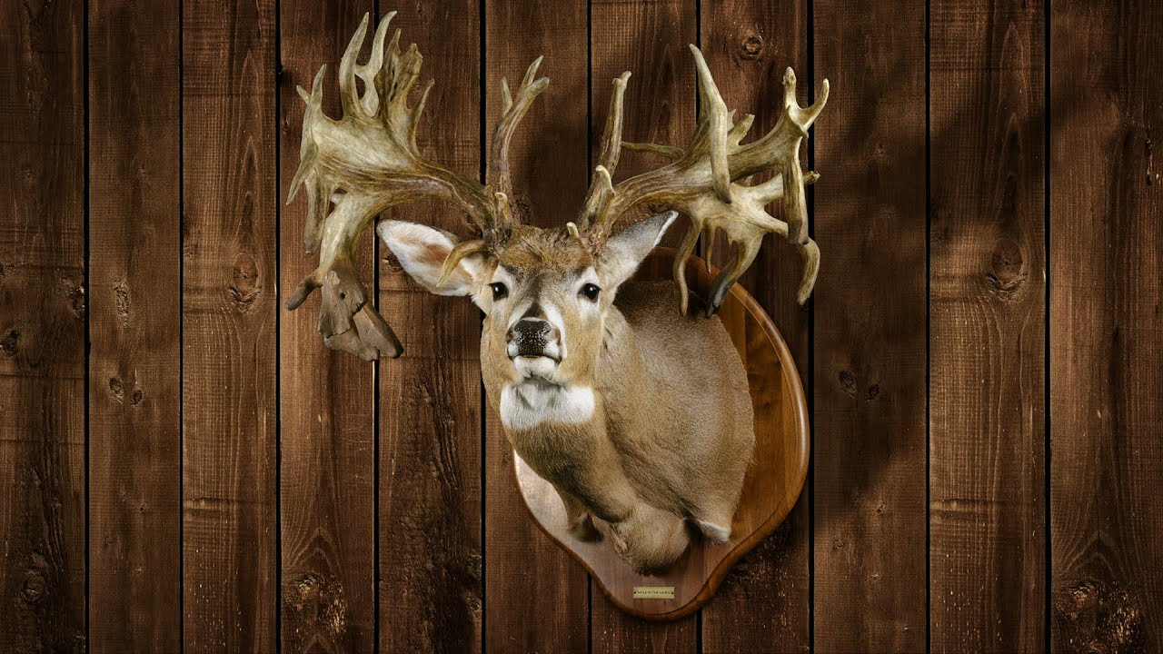 Legendary Whitetails Wallpaper Legendary Whitetails