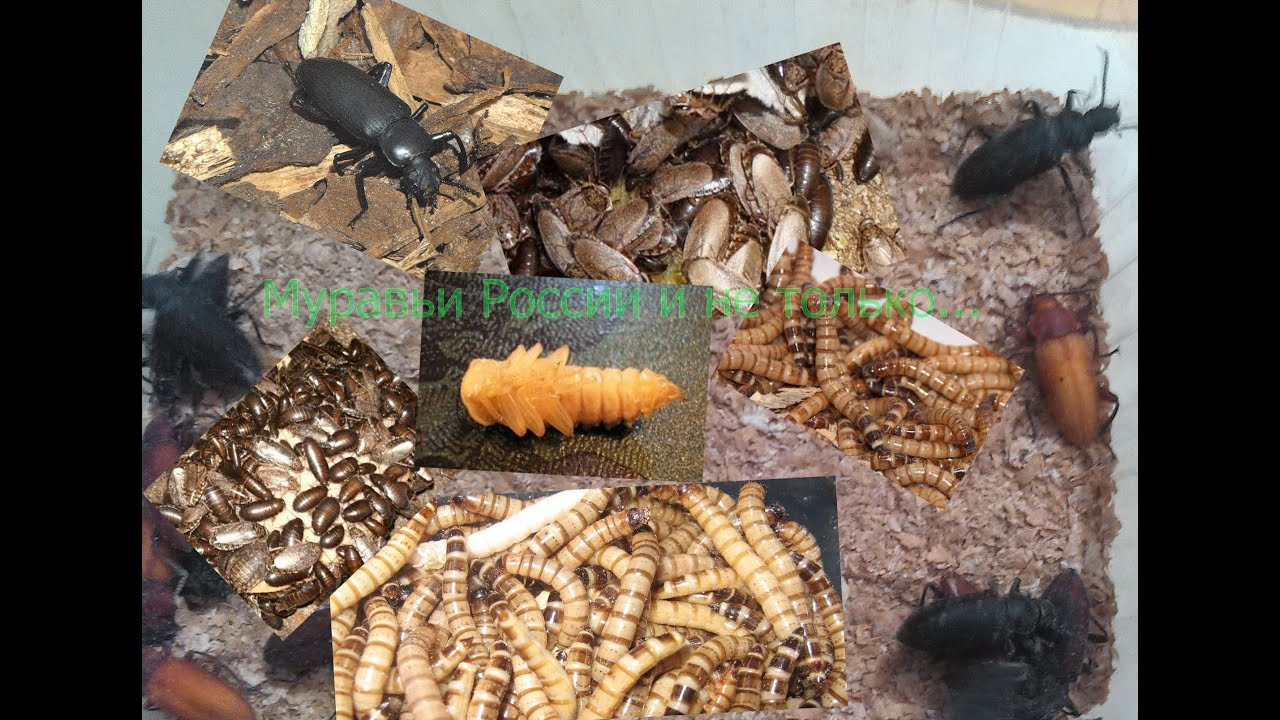Ферма муравьёв своими руками