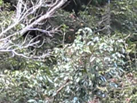 川湯温泉のお猿さん達