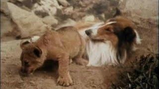 "Lassie - Episode #433 - ""Interlude of Mercy"" - Season 13, Ep. 16 - 01/08/1967"