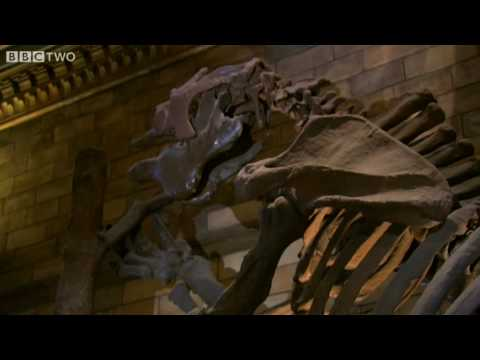 Giant Ground Sloth - Museum of Life - BBC Two Video