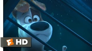The Secret Life of Pets - Get the Keys! Scene (8/10) | Movieclips