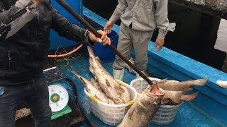 [CUỘC SỐNG NGƯ DÂN] 🐟 #1 - ĐI BÁN CÁ | DUC THUAN (fishermen selling fish)