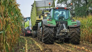 Modderen in de mais - Harvesting maize in mud - BMWW - Claas Jaguar 940 - Mais hakselen - Kukurydza