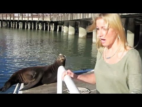 SEA LION ATTACK
