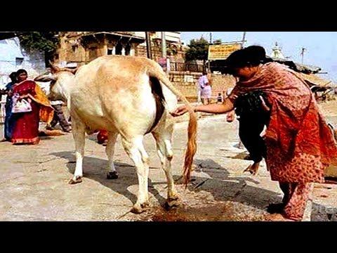 ऐसा आपको सिर्फ भारत देश में ही देखने को मिलेगा || 8 Amazing Facts About India