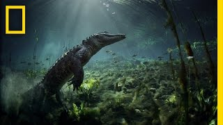 Meet the Residents of Everglades National Park | America