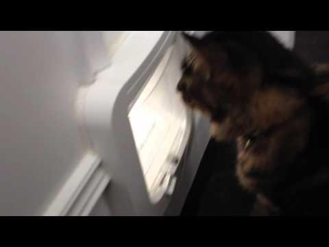 cat care booklet