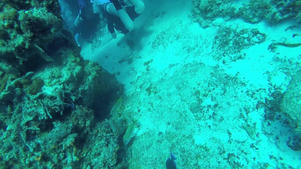 Cozumel dive highlights