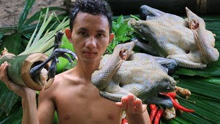Primitive Technology: Cooking Chicken in Bamboo in forest
