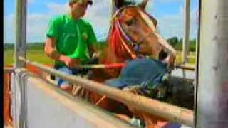 Record Rural - Com intensa rotina de treinos, cavalos de corrida se asemelham aos esportistas